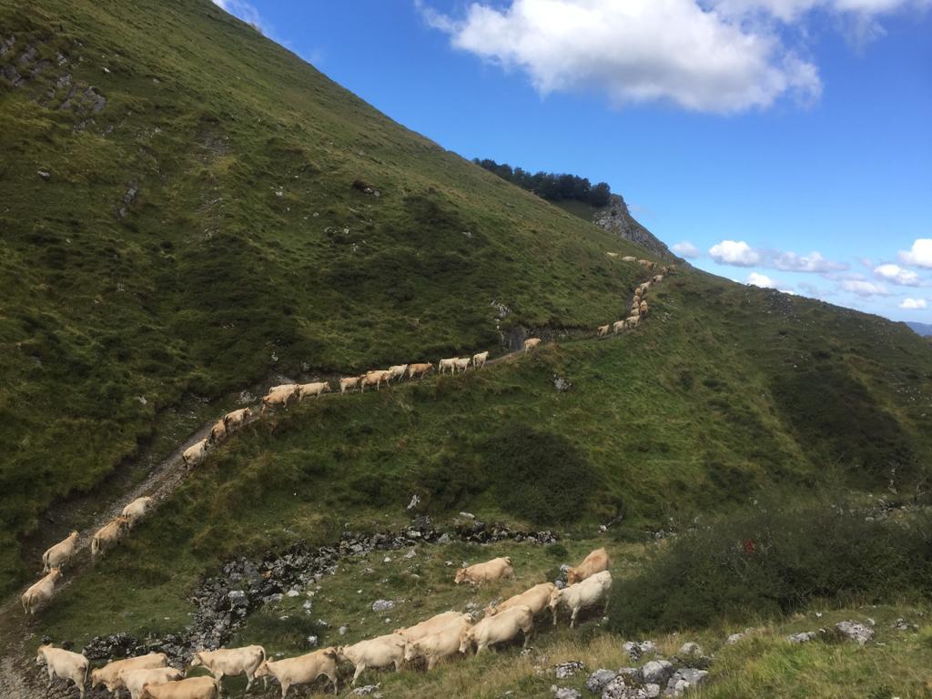 Los ganaderos de ENBA exigen a la Mancomunidad de Enirio-Aralar que preside el alcalde de Ordizia que pasen de las palabras a los hechos