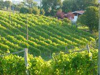 Abierto plazo para ayudas del Gobierno Vasco al sector vitivinícola de Euskadi
